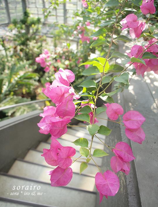 20101103_flower01.jpg