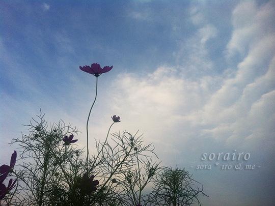 20140916_snap02.jpg